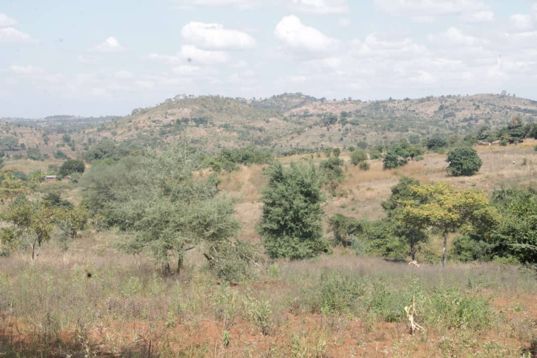 Project to restore 1288 ha of degraded catchments in Salima